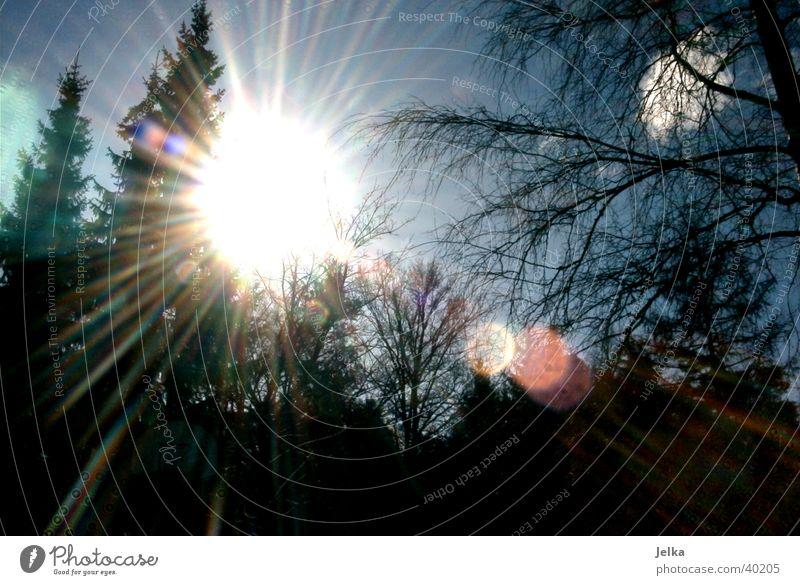 Wintersonne Sonne Schnee Baum Klima Tanne Farbfoto Licht Sonnenlicht Sonnenstrahlen Gegenlicht