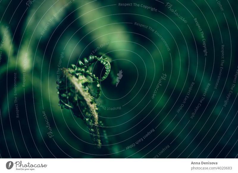 Nahaufnahme von Grünem Farn Wurmfarn polypodiopsida nicht blühend Pflanze Makro Muster Hintergrund grün tropisch Blatt Umwelt Wachstum Laubwerk Flora Garten