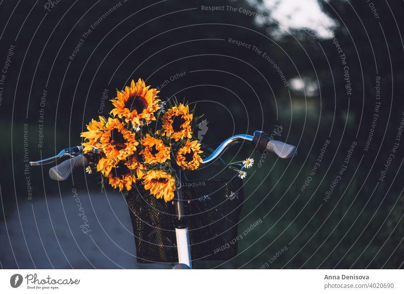 Oldtimer-Fahrrad mit Sonnenblumen Korb altehrwürdig stylisch Blumenstrauß Frau retro Rad romantisch weiblich England Großbritannien Europa außerhalb im Freien