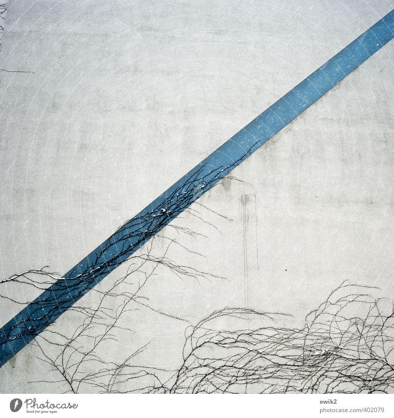 Bruttosozialprodukt blau weiß Pflanze Farbe Wand Mauer grau Linie Fassade Wachstum einfach festhalten dünn fest lang diagonal
