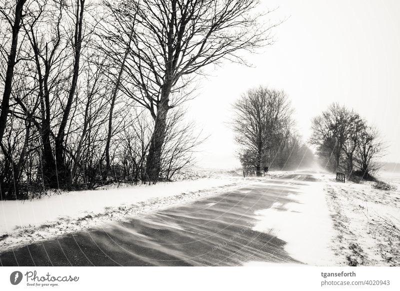 Schneeverwehungen Winter schneeverwehungen Schneesturm stasse Außenaufnahme Schneefall kalt Unwetter Sturm Baum Frost Wetter Menschenleer Schneelandschaft