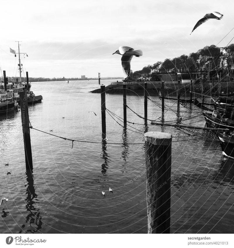 Achtung, Vögel von rechts! Vogel Elbe Hamburg Hafen Anlegestelle Hamburger Hafen Fluss Schwarzweißfoto Wasser Schifffahrt Menschenleer Wasserfahrzeug Verkehr