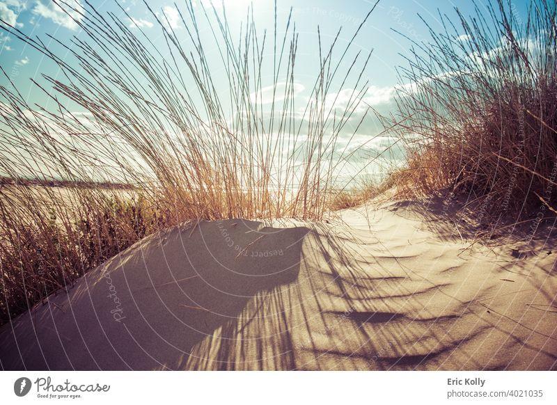 Kleine Sanddüne, bedeckt von Busch am Strand von Agde, Frankreich Stranddüne Badeurlaub Sandstrand Ferien & Urlaub & Reisen Farbfoto Sommer Sommerurlaub Natur