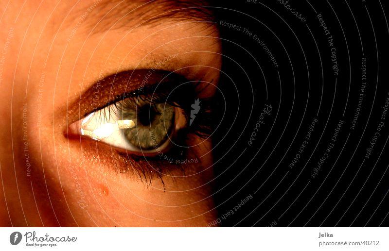 Auge Gesicht feminin Frau Erwachsene Sinnesorgane Wimpern face eye eyes mehrfarbig Studioaufnahme Textfreiraum rechts Kunstlicht Licht Schatten Blick nach vorn
