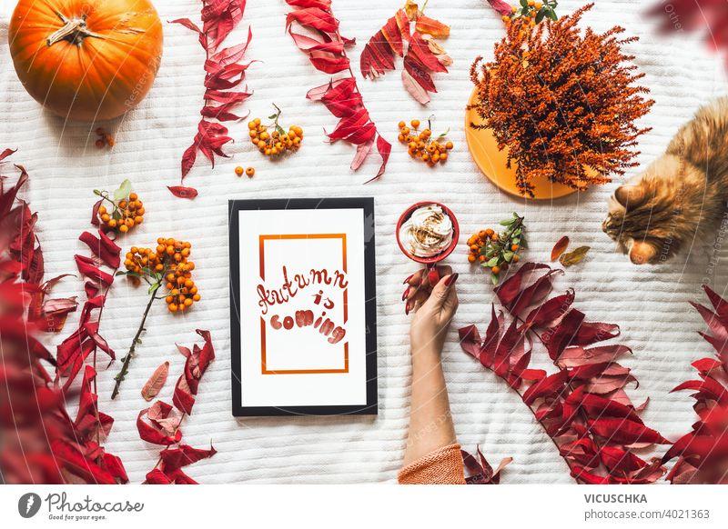 Herbst Konzept auf weißer Decke: Frauen Hand halt rote Tasse mit heißer Schokolade, Katze, Herbstblätter und Kürbis, schwarz Tablet-PC mit weißem Bildschirm.