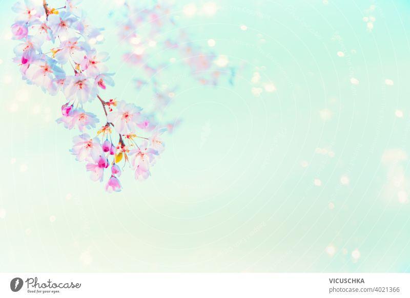 Frühlingshafte rosa Kirschblüte mit Sonnenschein Bokeh auf türkisblauem Hintergrund . Natur abstrakt schön Schönheit Blüte Ast Blütenknospen Kirsche geblümt