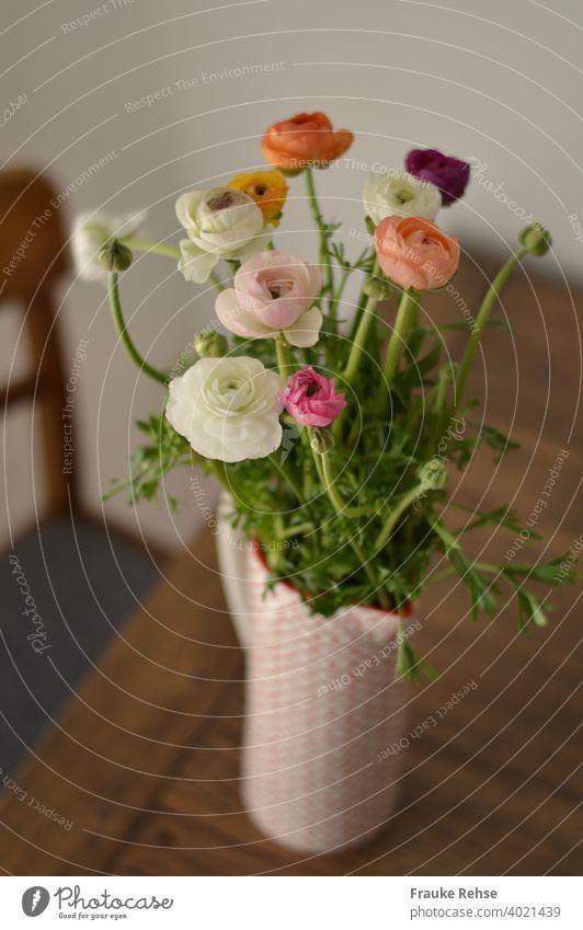 Strauß Ranunkeln in einem rot-weißen Krug, der auf einem Holztisch steht. Daneben ist noch ein Teil eines Stuhls zu sehen. Frühling Blumen Ranunkeln im Krug
