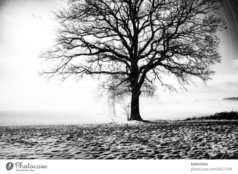 verwurzelt Baumstamm Äste und Zweige mystisch Klima traumhaft träumen Schwarzweißfoto geheimnisvoll Nebel Märchenwald schön verträumt idyllisch Schneedecke