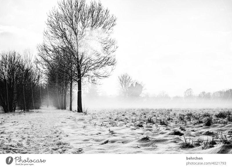 ruhiger morgen schön Märchenwald Schneedecke Winterspaziergang Kälte Bäume stille Wetter Sonnenlicht Außenaufnahme Winterlandschaft kalt Wintertag