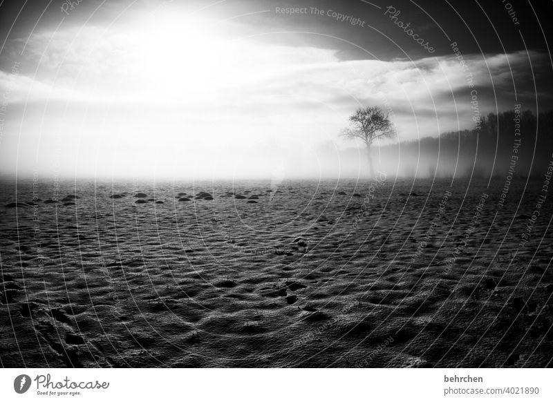 mysteryland Baumstamm Äste und Zweige mystisch ruhig Umwelt Jahreszeiten Raureif gefroren frieren Himmel Landschaft Frost Menschenleer Schneefall Landwirtschaft