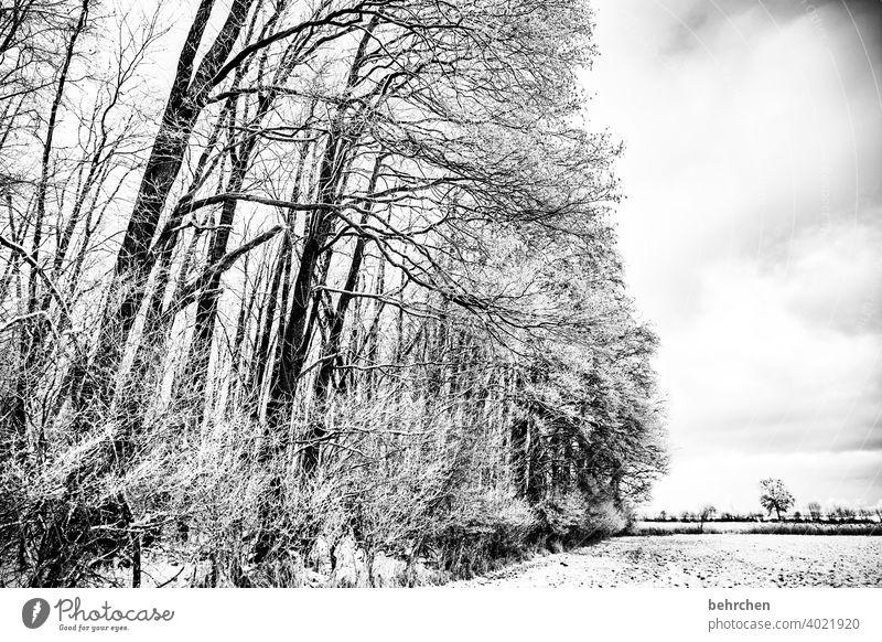 durchatmen Baumstamm Äste und Zweige mystisch Klima traumhaft träumen Schwarzweißfoto Nebel geheimnisvoll Märchenwald schön verträumt idyllisch Schneedecke