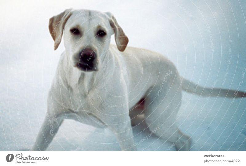 gina im schnee Tier Schnee Hund