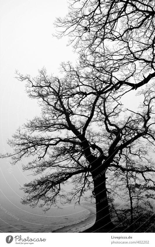 Insel Rügen Umwelt Natur Landschaft Pflanze Wasser Himmel Wolken Herbst schlechtes Wetter Nebel Baum Gras Sträucher Wildpflanze Wald Küste Strand Bucht Ostsee