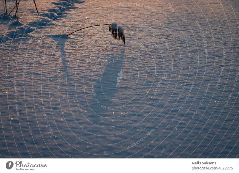 Schilf mit langen Schatten auf Eis und Schnee bedeckten Fluss, einige Tier Fußspuren im Hintergrund, kalten Morgensonne und einige gefallene Sterne auf Schnee