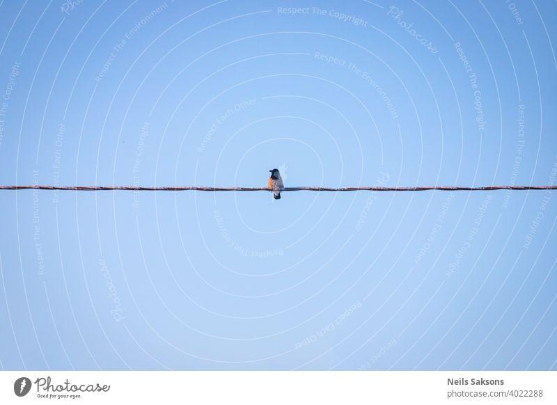 Krähe sitzt auf einer Stromleitung. Vogel schaut zum Fluss am frühen Morgen, Drahtleitung und Vogel Silhouette, goldenen Sonnenaufgang abstrakt Tier Atmosphäre