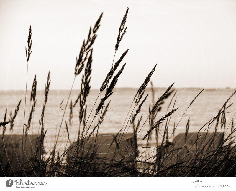 Haffkrug Meer Landschaft Gras Ostsee Tourismus Schilfrohr Strandkorb Europa Schwarzweißfoto Außenaufnahme Menschenleer Dämmerung