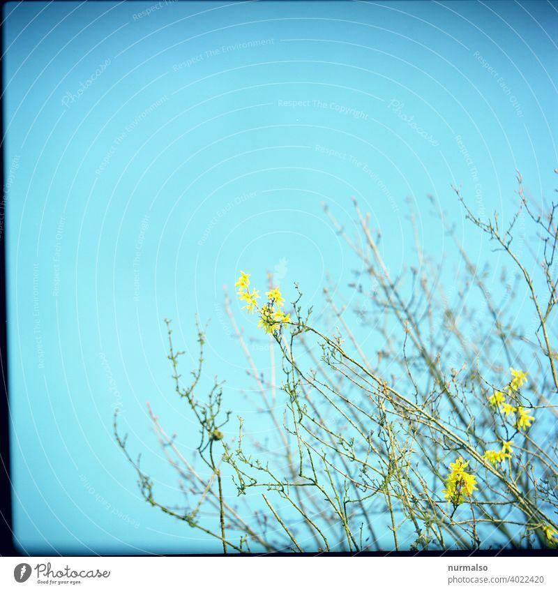 Frühlingsbote Spross blüte busch sprießen wachsen frühling wärme wachsengarten natur nachhaltig sauber ökologisch hecke schönheit duft baumblüte