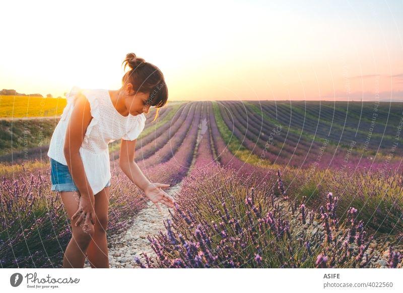 Nettes Mädchen berühren Blumen in einem französischen Lavendelfeld bei Sonnenuntergang Feld Kind Sommer Spaß Freude Glück Provence Frankreich Natur Urlaub