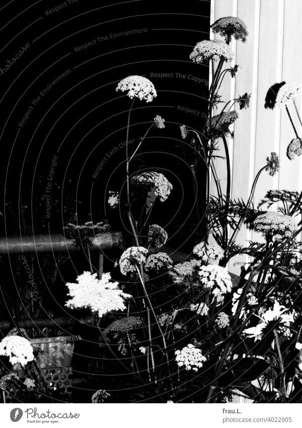 Sommerblumen in der Nacht Blüten Blütenblätter Pflanze Blumen Abend Balkon Dachterrasse Blitzlich Karotte
