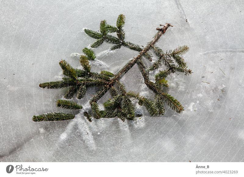 Auf Eis gelegt – Tannenzweig Weihnachten Neujahr Silvester u. Neujahr Weihnachten & Advent Hintergrund Feste & Feiern Dekoration & Verzierung Frohe Weihnachten
