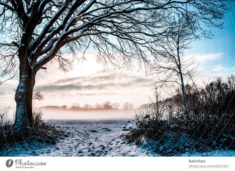für airene:) Baumstamm Äste und Zweige Sonne Sonnenlicht Schneefall weiß Winter Wald Feld Wiese Natur Umwelt ruhig Himmel Landschaft Frost Bäume