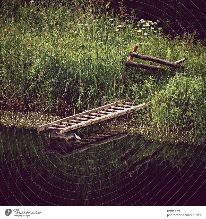 waldsee Natur grün Wasser Pflanze Sommer Landschaft Wald dunkel kalt Gras Holz natürlich braun Idylle authentisch ästhetisch