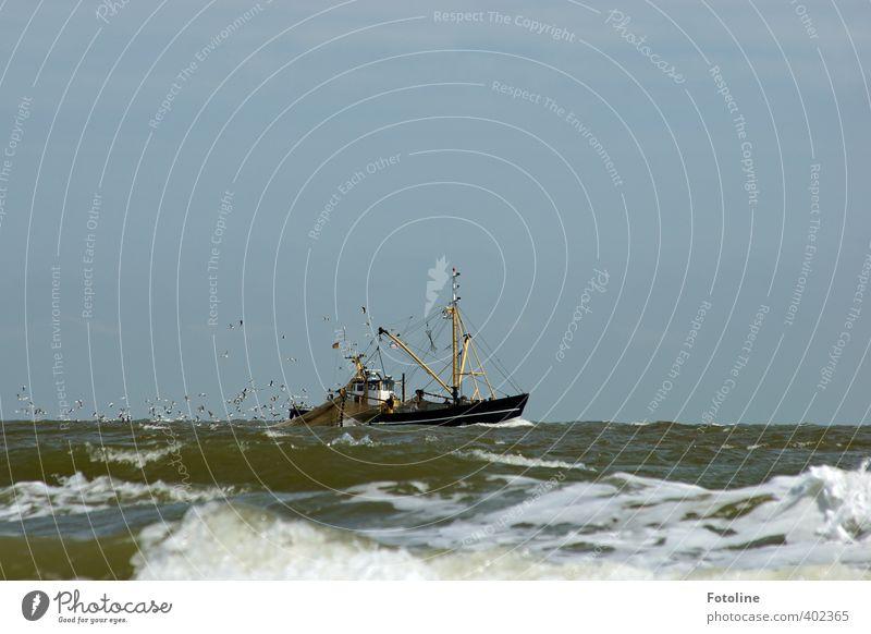 Ahoi! Natur Wasser Meer kalt Umwelt Wasserfahrzeug Wellen nass Urelemente Coolness Schifffahrt Nordsee Möwe Fischereiwirtschaft Fischerboot Vogelschwarm
