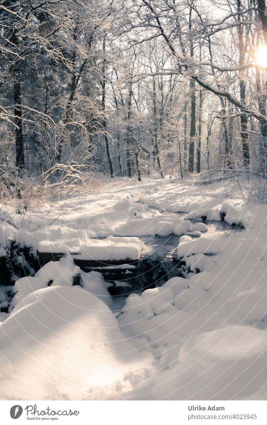 Noch ein bisschen Winterwonderland - Schneebedeckter Bach im Winter-Wald Garlstedt Osterholz-Scharmbeck Klima Umwelt Niedersachsen Bremen idyllisch Schneefall