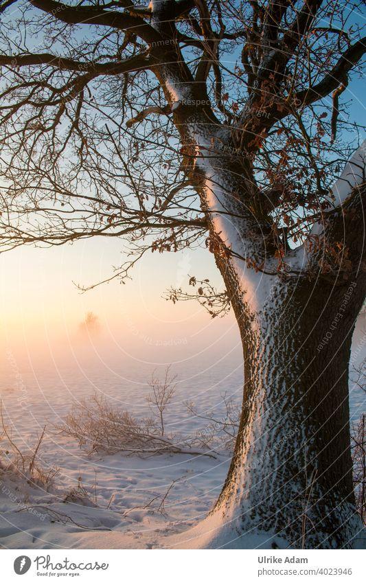Eiche im Winter-Licht Nebel Deutschland Worpswede Osterholz-Scharmbeck Bremen Teufelsmoor Raureif ruhig weiß Himmel Klima Klimawandel Eis Baum kalt Stimmung