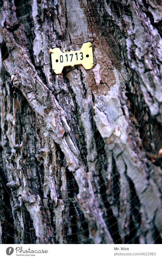 Baumzählung Garten Ziffern & Zahlen kennzeichnen Umweltschutz Baumstamm Forstwirtschaft zählen Baumrinde Wald Holz Waldsterben Nutzholz Schilder & Markierungen