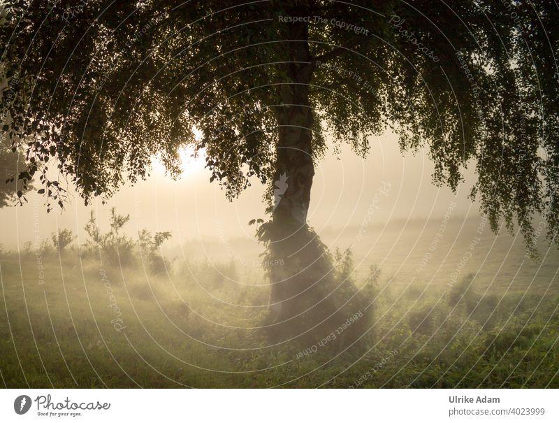 Die mystische Birke - Baum im Nebel bei Sonnenaufgang im Teufelsmoor bei Worpswede Mystisch Osterholz-Scharmbeck Bremen Landschaft Dunst Trauer Trauerkarte