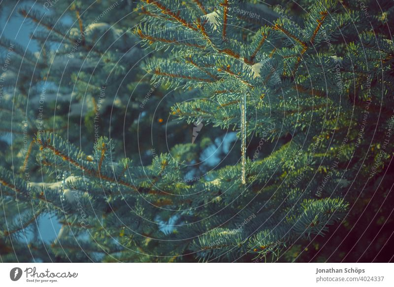 Eiszapfen hängt an Nadelbaum Architektur Baum Dach Dachkante Dachrinne Gebäude Gefahr Haus Jahreszeit Schnee Tanne Winter gefroren kalt Frost Natur frieren