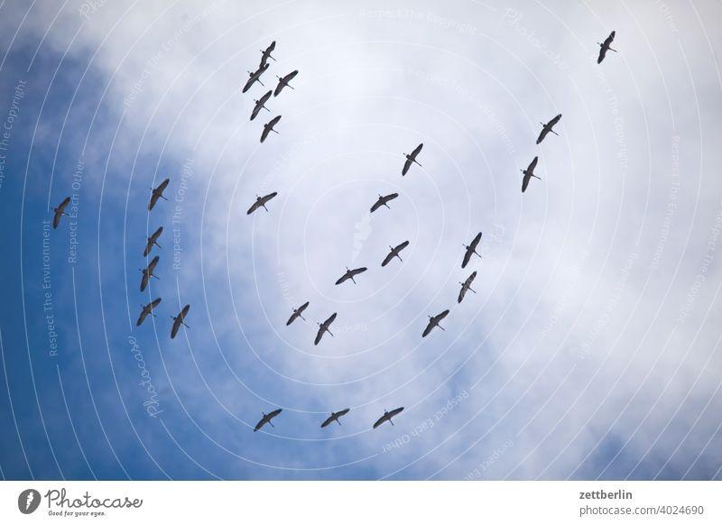 Kraniche fliegen formation frühling frühlingsboten himmel kranich saison schoof schwarm vogel vogelschwarm wolke zugvogel himmel wolke flugbild natur tier