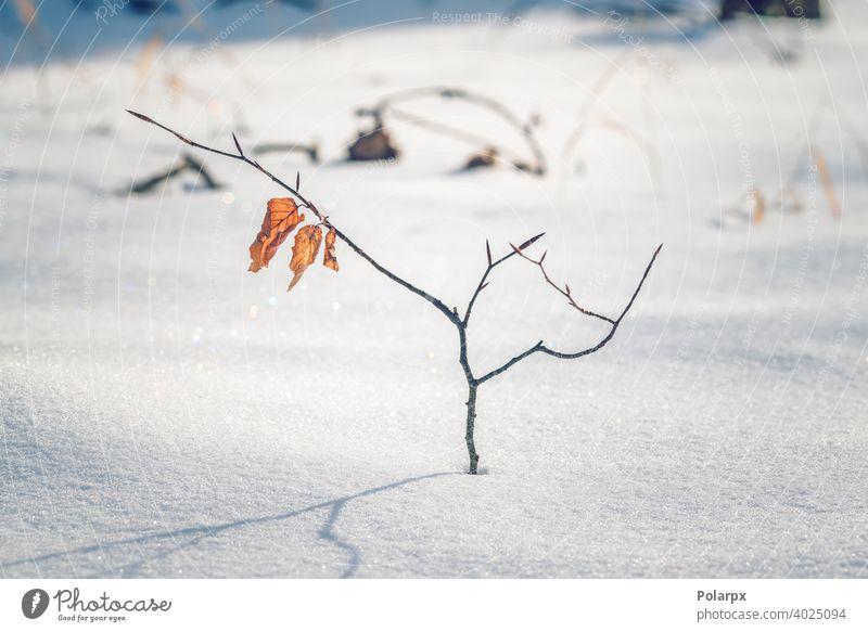 Kleine Buche mit goldfarbenen Blättern Forstwirtschaft golden Oktober trocknen Wunderland wild kalt fallen November Dezember Schneeflocke schneebedeckt erste