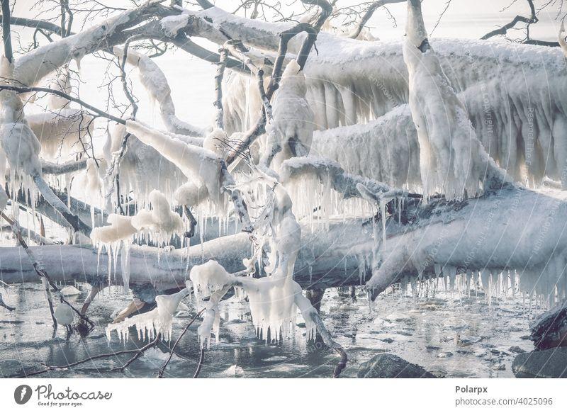 Eiszapfen an einem gefrorenen Baum an der Meeresküste Ast zerlaufen Meeresufer nördlich cool saisonbedingt frieren niemand Dezember Schönheit Norden verschneite