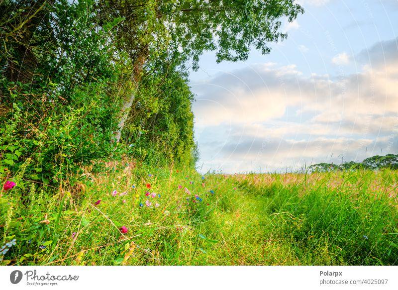 Bunte Wildblumen auf einer idyllischen Wiese purpur malerisch Blütenblatt Laubwerk geblümt gelb Landschaft Ansicht Blütezeit natürlich farbenfroh Botanik