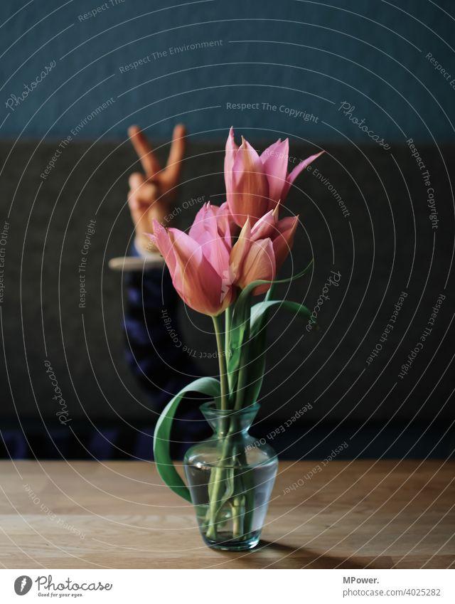 flowerpower Tulpe Tulpenblüte Hand Kind Vase Tisch Frühlingsblume Blume Blüte Blumenstrauß Blühend Pflanze Dekoration & Verzierung peacezeichen Peace Finger