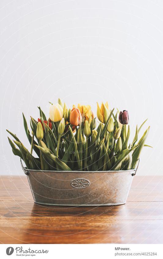frühlingsblume tulpe Tulpe Blumen Blumenvase Frühling Vase Tisch Frühlingsgefühle Frühlingsblume Blumenstrauß Blüte Dekoration & Verzierung Blühend Menschenleer