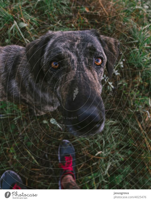 Immer mit meinem besten Freund unschuldig beobachten Gras Hirtenhund grün Neugier Sicherheit Tierporträt Außenaufnahme bewachen schwarz braun Farbfoto Haustier