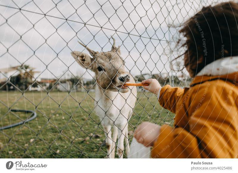 Kind füttert Hirschkuh durch den Zaun füttern Tierliebe Natur Wildtier Außenaufnahme Fressen Schwache Tiefenschärfe Tiergesicht Menschenleer Tierporträt Umwelt