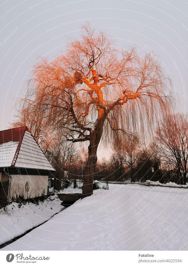 Es ist noch früh. Ganz langsam taucht die aufgehende Sonne den Baum in ein rotgoldenes Licht. Sonnenaufgang Winter Landschaft Außenaufnahme Farbfoto Natur