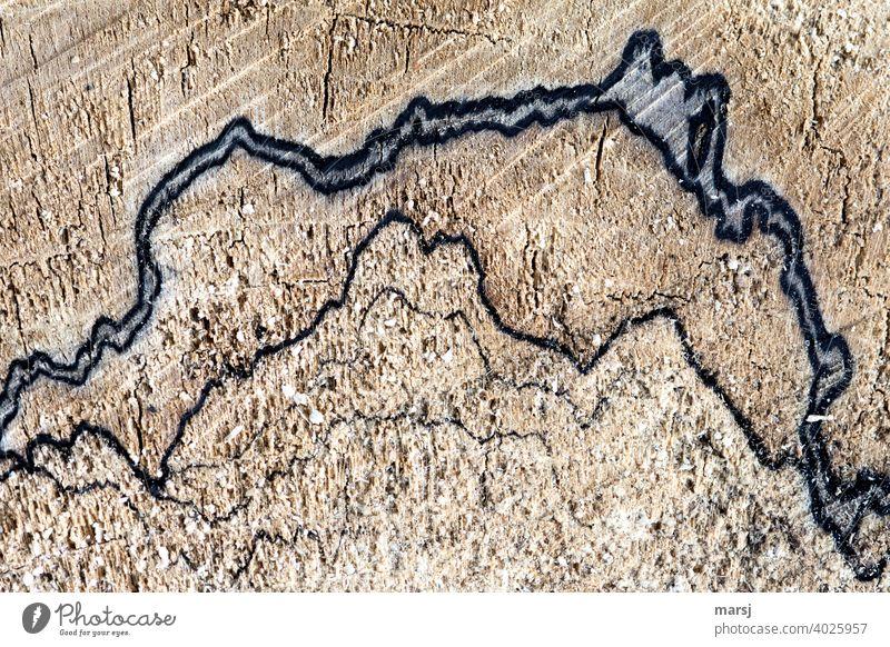 Kunstwerk, ähnlich einer Tuschezeichnung von Bergen auf totem Holz. Alles natürlich entstanden. Holzstruktur Strukturen & Formen Muster abstrakt Farbfoto