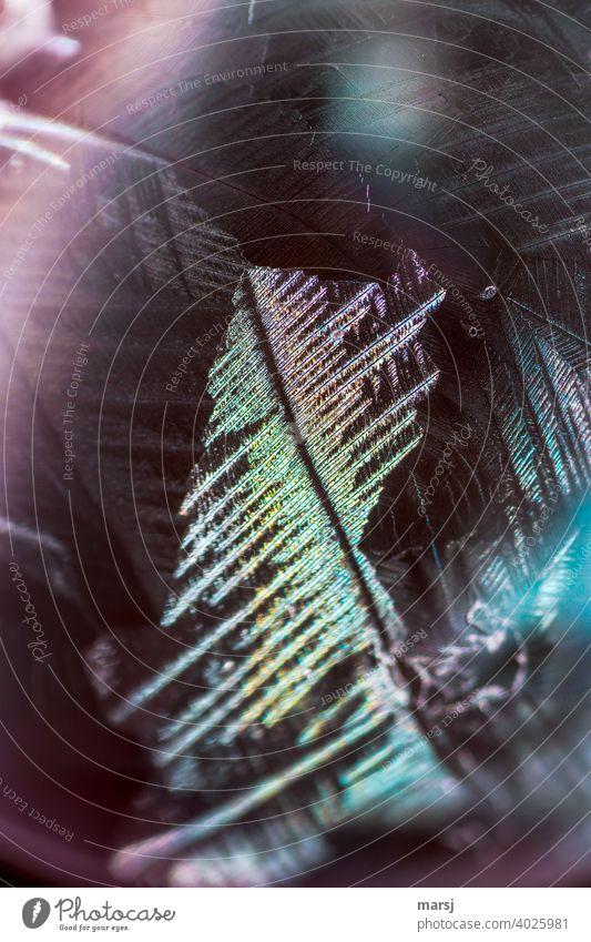 Buntes, gefiedertes Eiskristall auf gefrorener Seifenblase Kristallstrukturen außergewöhnlich Natur ästhetisch Stolz glänzend durchleuchtet Muster Tag Licht