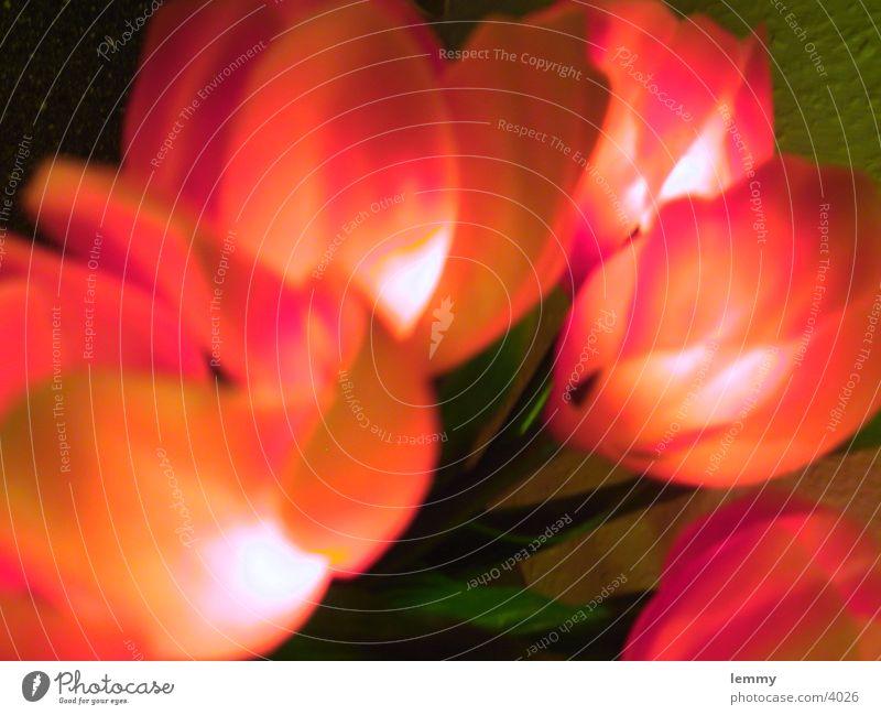 flowers Dinge