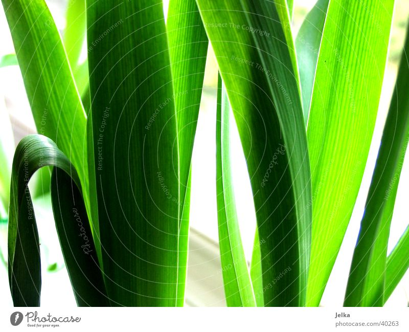 Tulpen Blätter Natur grün Pflanze Blatt