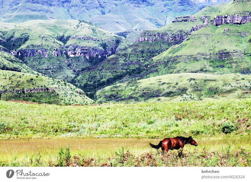 freiheit Sonnenlicht Kontrast Licht Tag Außenaufnahme Farbfoto Drakensberge Südafrika traumhaft schön Fernweh wandern grün fantastisch exotisch außergewöhnlich