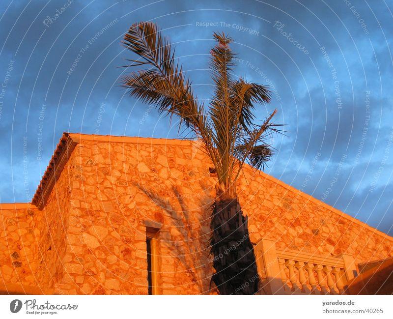 Landhaus mit Palme Ferienhaus Wolken Architektur Himmel Ballustrade Wind