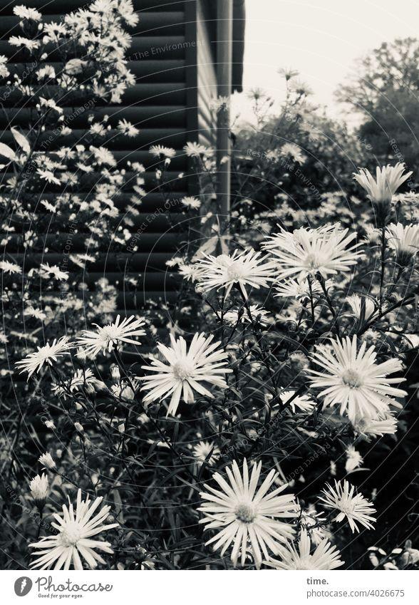 Sommerliebe garten blumen pflanzen gartenlaube echinacea wachsen wachstum üppig sommer holzhaus blühen Gemeinschaft zusammen