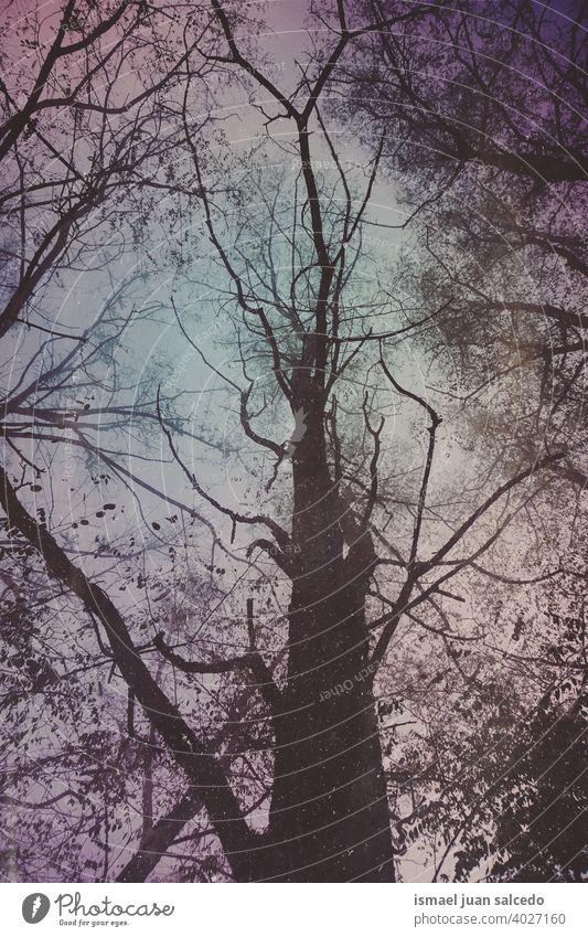 Baumstamm und Äste in der Wintersaison Bäume Niederlassungen Nebel Wald Berge u. Gebirge Natur Landschaft im Freien Ruhe Gelassenheit Stille Meditation
