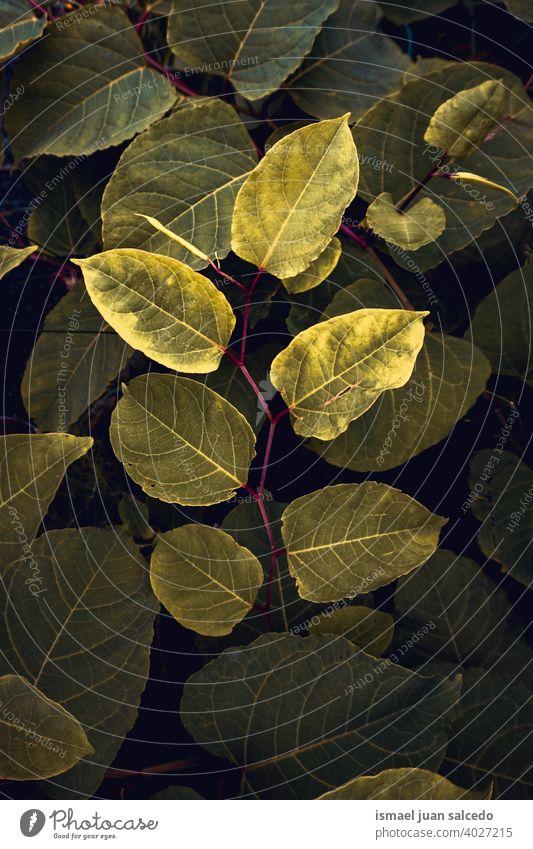 grüne Pflanze Blätter im Garten im Frühjahr Saison Blatt geblümt Natur natürlich Laubwerk dekorativ Dekoration & Verzierung abstrakt texturiert Frische